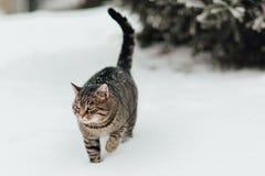 Een kat in de sneeuw Stock Foto's