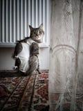 Een kat in een deken na een sterilisatieverrichting Royalty-vrije Stock Afbeelding