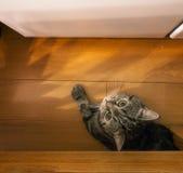 Een kat die bij me staren royalty-vrije stock afbeeldingen