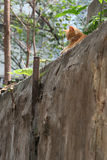 Een kat die in binnenplaats ersting Stock Foto