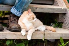 Een kat die dichtbij de laarzen van een dorpsbewoner leggen Stock Fotografie