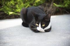 Een Kat die op de vloer liggen Royalty-vrije Stock Foto's