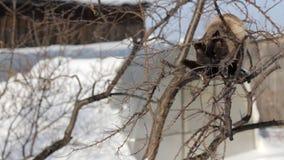 Een kat die op logboekhout in de tuin liggen stock video
