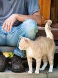 Een kat die voor voedsel bedelen Stock Foto's
