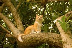 Een kat in een boleyboom Stock Foto's