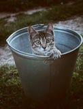 Een kat in een emmer Stock Fotografie