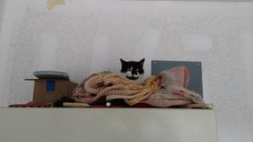 Een Kat, een Hangmat en een Koelkast Stock Afbeelding