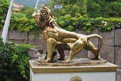 Een kat en een leeuw - grappig beeld van steun royalty-vrije stock foto