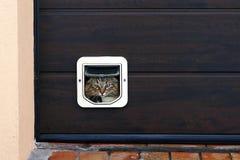 Een kat gaat door een kattenklep stock afbeeldingen