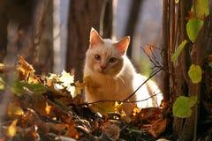Een kat in het de herfstbos Stock Afbeeldingen