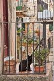 Een kat in het dorp van Modica in Italië stock afbeeldingen