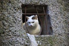 Een kat kijkt door vensters in het heksendorp van Triora, Imperia, Ligurië, Italië royalty-vrije stock foto's