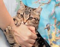 Een kat knaagt aan het handvat van haar eigenaar Royalty-vrije Stock Fotografie