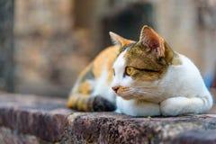 Een kat ligt Royalty-vrije Stock Afbeeldingen