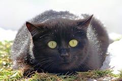 Een kat met grote ogen Royalty-vrije Stock Foto