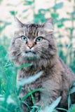 Een kat met mooie groene ogen in het gras royalty-vrije stock foto