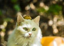 Een kat met een noot op het hoofd stock fotografie