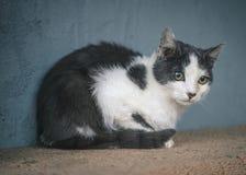 Een kat met ogenhoogtepunt van droefheid Stock Foto's