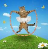 Een kat met worsttouwtjespringen stock afbeelding