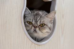 Een kat met zijn uit hoofd royalty-vrije stock afbeelding