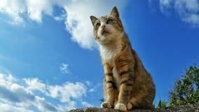 Een kat op de muur die rond eruit zien Royalty-vrije Stock Fotografie