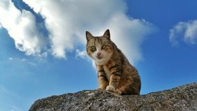 Een kat op de rots Stock Foto