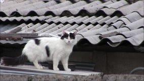Een kat op het dak stock videobeelden