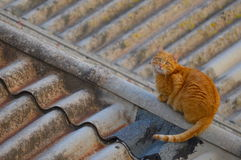 Een kat op het dak Stock Foto's