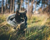Een kat op een openluchtavontuur Royalty-vrije Stock Afbeelding