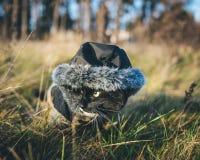 Een kat op een openluchtavontuur Royalty-vrije Stock Fotografie