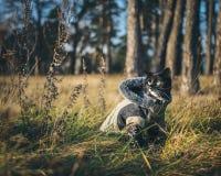 Een kat op een openluchtavontuur Stock Fotografie