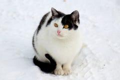 Een kat op een straatgang royalty-vrije stock foto's