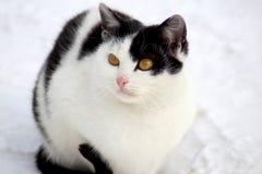 Een kat op een straatgang royalty-vrije stock foto