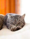 Een kat rekt zich uit Royalty-vrije Stock Afbeelding