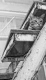 Een kat rust in een trap Royalty-vrije Stock Afbeelding