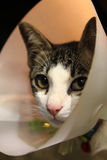 Een kat Socute Royalty-vrije Stock Fotografie