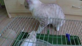 Een kat speelt met een muis in een kooi stock videobeelden