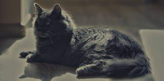Een kat van zilveren kleur ligt op de vloer stock afbeelding