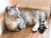 Een Kat voelt Slaperig Royalty-vrije Stock Foto