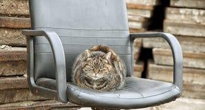 Een kat zit lui royalty-vrije stock afbeeldingen