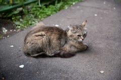 Een kat zit op de weg royalty-vrije stock fotografie