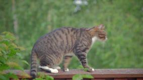 Een kat zit op een hoge omheining en horloges stock videobeelden