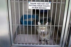 Een kat zit in zijn kooi stock fotografie