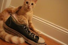Een katje en zijn tennisschoen stock foto