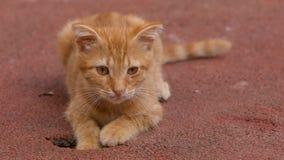 Een katje van de straatgember Istanboel, Turkije stock foto