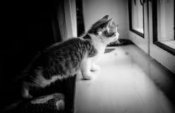 Een katje in zwart-wit door het venster royalty-vrije stock foto's
