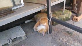 Een katten diepe slaap bij de markt stock afbeeldingen