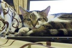 Een kattenportret Stock Afbeelding