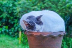 Een Kattenslaap Stock Afbeeldingen