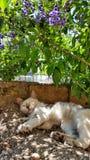 Een kattenslaap in de tuin Stock Fotografie